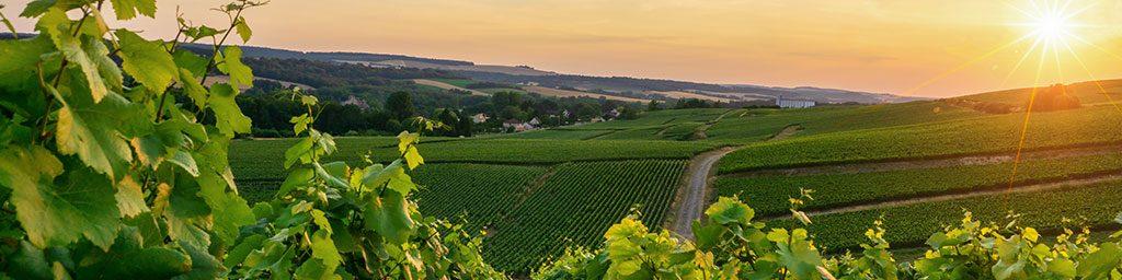 Journée Recherche en Marketing du Vin - Montpellier Management